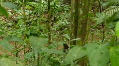 Small water stream seen through dense foliage with bird foraging