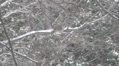 Large bird owl observing the ground in search for a prey during snowfall