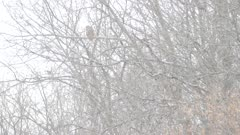 Dense snowfall partially hiding owl perched on a tree in the distance