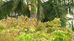 Kiskadee and woodpecker birds sharing same eco system in Panama