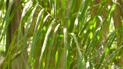 Small warbler bird hopping up on a palmtree leaf on a sunny day