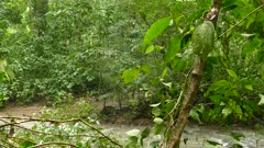 Jungle river with spider web hanging near tree with gently wind blowing
