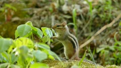 Lovely little chipmunk standing on two feet while looking around before leaving