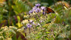 Orange butterfly perched atop a purple flower under bright sunshine