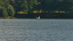 Tern flying low over water filled with other birds on sandy bank