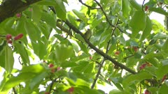 Ovenbird standing in tree under the protection of the shadowy canopy