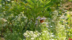 Bright busy bush of plants and flowers with butterfly flying within