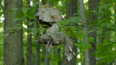Close view of critically damaged beehive hanging down in forest at dusk