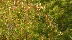 Almost distinctable tiny birds flying within fruit tree with flies flying around