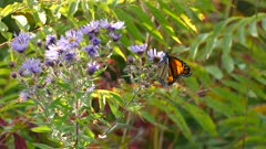 Pretty sun light shines on flower on which a butterfly feeds from before take off