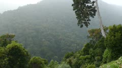 Dramatic jungle mountain scenery in Costa Rica with birds flying
