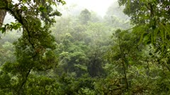 Moderate wind pushes clouds moves trees in Costa Rica jungle