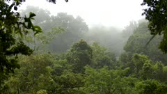 Never ending beautiful lush mountain cloud forest of Costa Rica