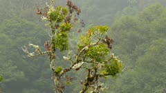 Tree covered in moss in Costa Rica cloudforest with pretty bird