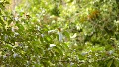 Beautiful tiny bird blackburnian warbler thriving in Costa Rica