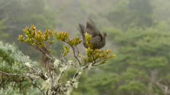 Tropical dry forest of Costa Rica is home to bird with moving clouds