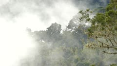 Low level clouds slowly moving thru dramatic cloud forest of Costa Rica