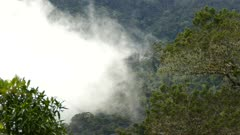 Slow rotation of cloud formation within the lush cloud forest mountains