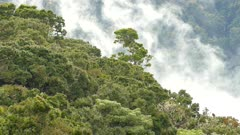 Levels of cloud forest of Costa Rica with moving humid condensation