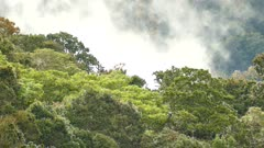 Tree canopy with light wind and moving clouds in background