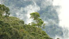 Exotic tropical landscape with single tree peeking out of rainforest