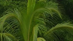 Light rain fall on vibrant lush palm tree leaf moving slightly in the wind