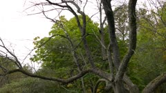 Pileated woodpecker on tree fly away
