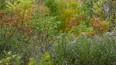 A colourful dense forest in late summer