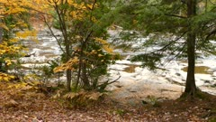 Green pine trees contrast with yellow fall leaf trees growing next to river