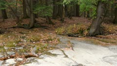 Trees grow perfectly fine on rocky forest floor despite lack of regular earthy soil