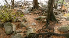 Forest floor offers a nice mix of colored vegetation in fall near the river