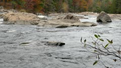 Vasts waterways are untamed in the Canadian Shield geological formation