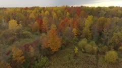 Dawn setting on fall forest filmed by drone flying slowly forward