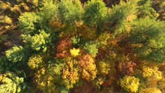 Overhead view of dense bushy fall forest with many shades of colors