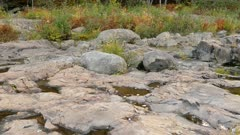 Small rain pools forming on rocky terrain in southeastern Canada