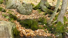 Tiny miniature stream of water in the nature makes its way tru fallen fall leaves
