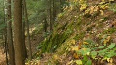 Cliffs of the fall mixed forest of North American can be beautiful at times