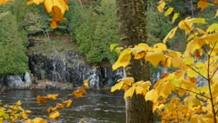 Amazing display of natural beauty in fall at a river flowing in a gorge