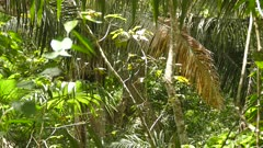 Sunny rain forest with a jacamar bird taking off and flying away from center