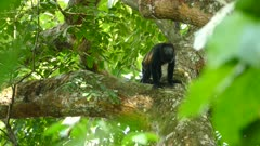 Strange troubling lone behavior in abnormally secluded monkey out of group