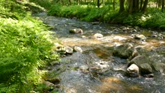 Sunny summery lively riffle overview in woods panning right,