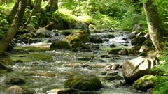 Natural  calmly rumbling rocky waterfall under woods static