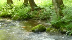 high grass forest undergrowth  mossy stone in water close up