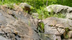 Water leaks out of the stone rock landscape static view