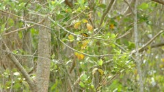 Yellow plumaged black bird in breeze  fly away back view close up