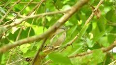Green Summer covert surveillance scenery of bird in tropic