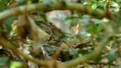 Tiny reptile alligator stands out behind the leaves  perspective close up