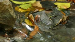 Water running over fallen leaves in a stream