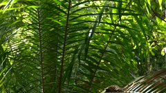 Strong fern limb natural summer suncover fence