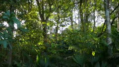 Therapeutic psychological habitat woods undergrowth pan right